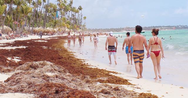 El sargazo afecta las playas de Punta Cana